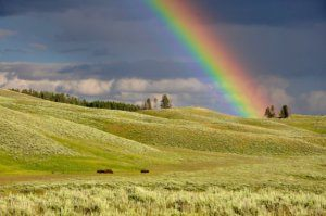 horses and rainbows